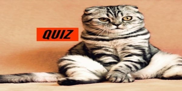 QUIZ: Can You Name Cat Breeds Just By Picture? - Quizondo