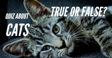quiz about cats true false