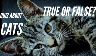 quiz about cats true false
