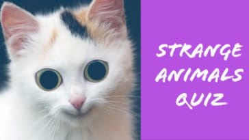 strange animals quiz