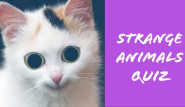 strange animals quiz