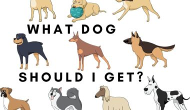 what dog should I get quiz