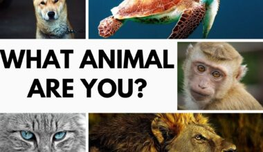 what animal am I quiz