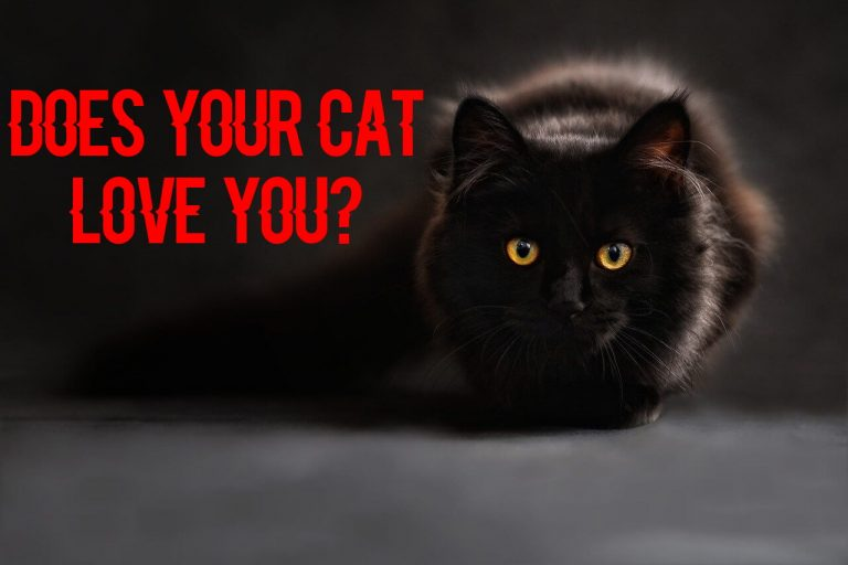 does my cat love me quiz